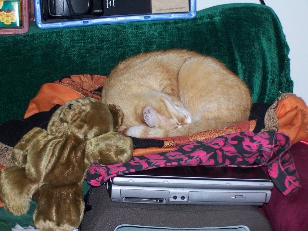 cat plus bear plus laptop