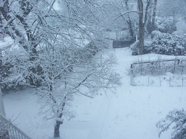 snow 1