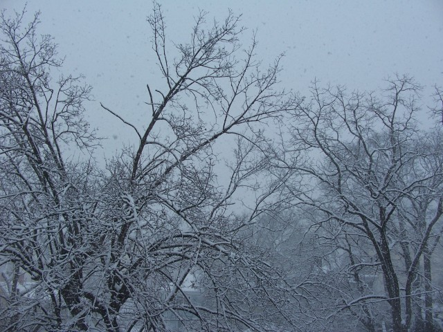 snow 3